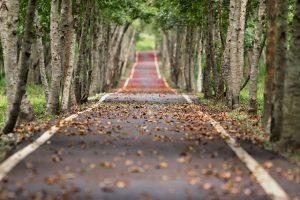 route bordée de platanes